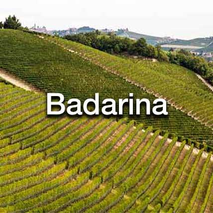 Badarina